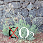 Huellas sin carbono Lanzarote