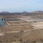 Ecoturismo y observación de aves en las Salinas de Janubio