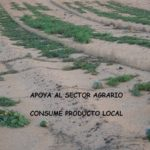 Lanzarote, producto local – ganancia global . Actitud GLOCAL