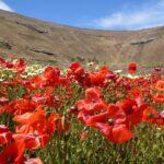 (Español) Senderismo e interpretación botánica en Lanzarote
