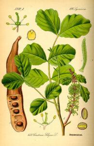 Lámina ilustración